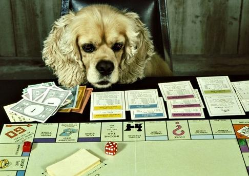 cute dog playing monopoly