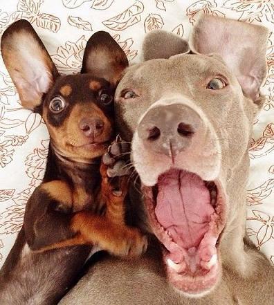 cute dogs best friends