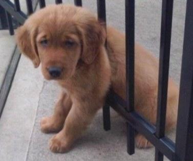 cute puppy stucked