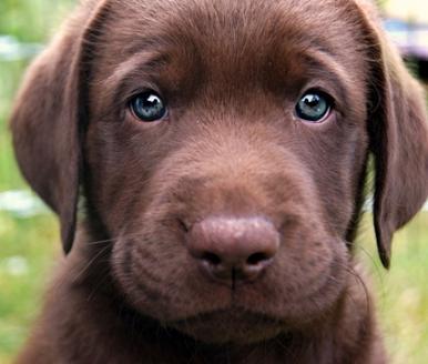 cute-sad-puppy-face