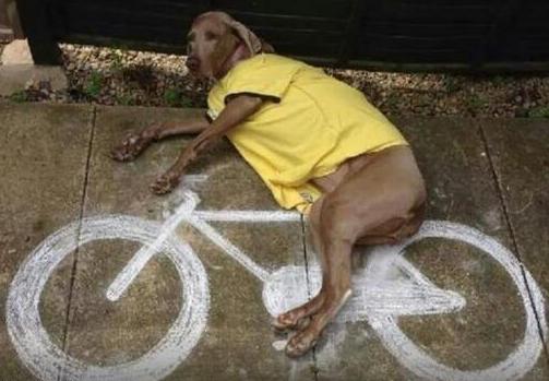 dog on chalk bicycle.jpg