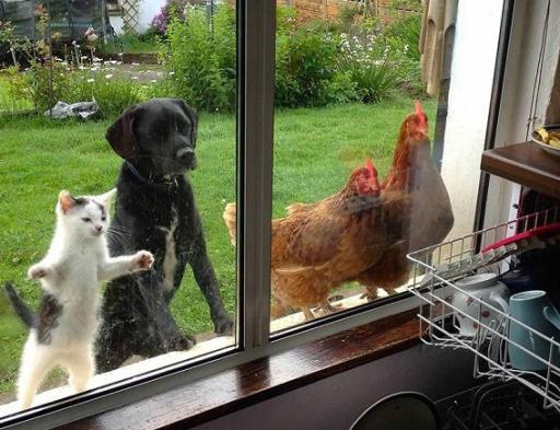 funny animals looking through window