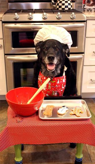 funny dog baking