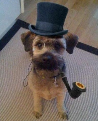 funny dog with hat and pipe
