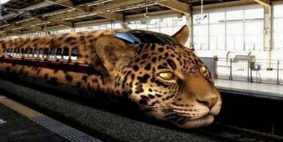 leopard train