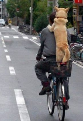 man and dog on bicycle
