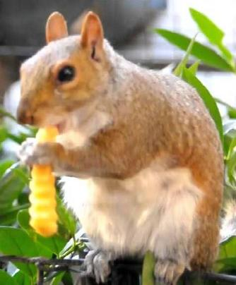 squirrel with french fries
