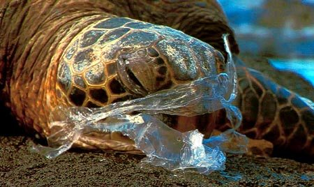 turtle with plastic
