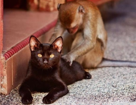 black cat and monkey