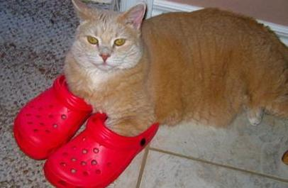 cat in red crocs
