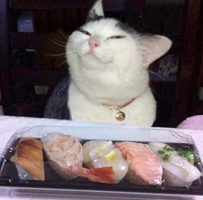 cat loves sushi