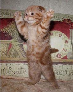cat praising