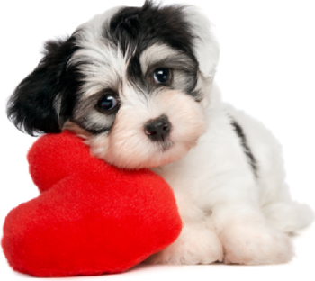 cute puppy with heart pillow.PNG