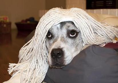 dog with mop-2