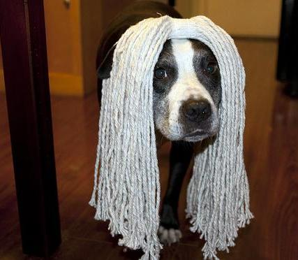 dog with mop