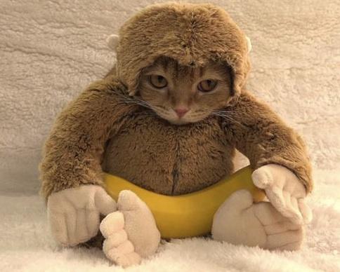 funny cat monkey