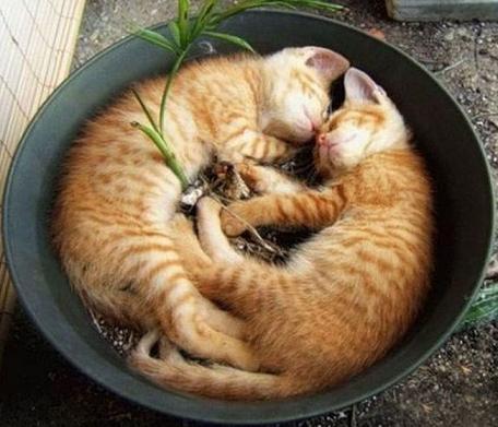 funny cats sleeping