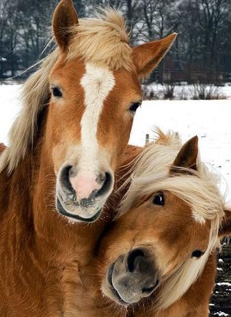 happy horse-2