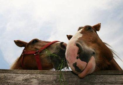 happy horse-3