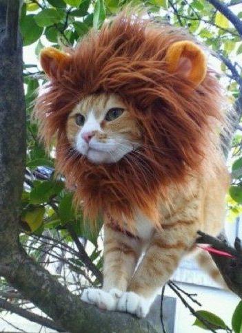 Lion-Cat-Halloween-Costume