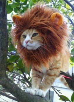 Lion-Cat-Halloween-Costume