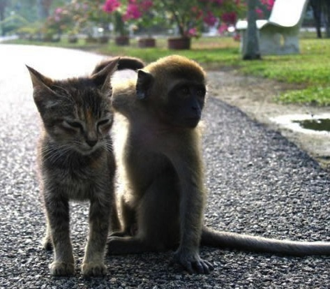 little monkey and kitten