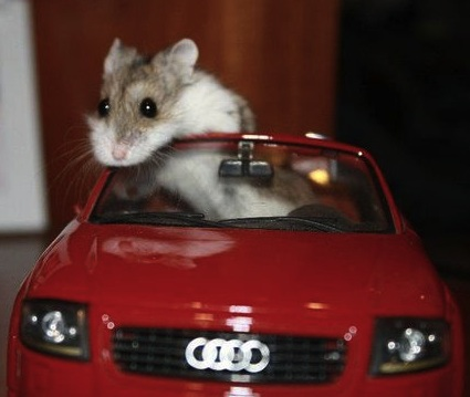 little mouse in audi