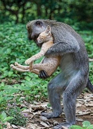 monkey helping cat