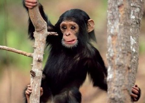 monkey not giving up