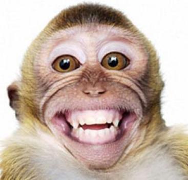 monkey smiling.jpg