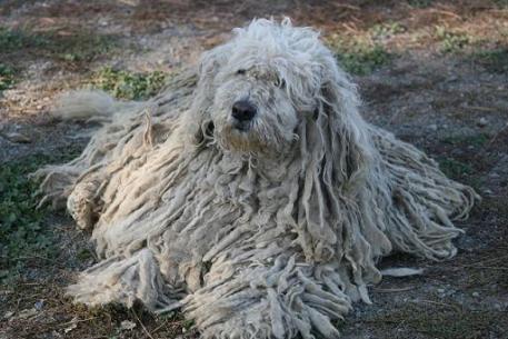 mop dog-4