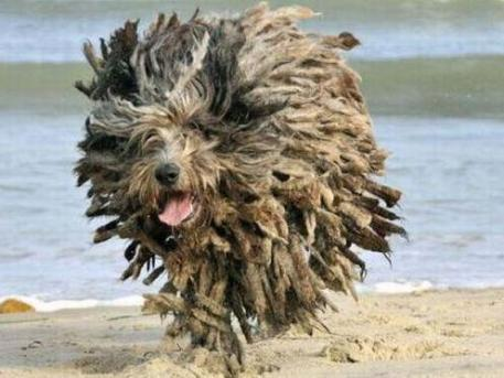 mop dog at beach