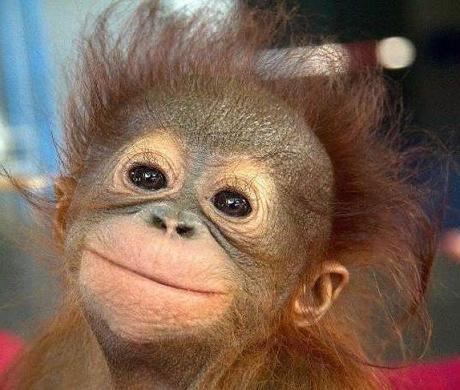 special monkey