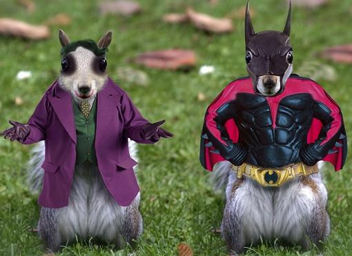 Batman-Squirrels-53837