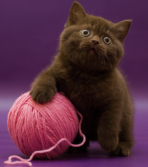 cute cat with wool.jpg