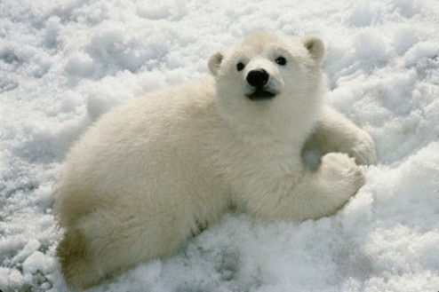 cute polar bear happy