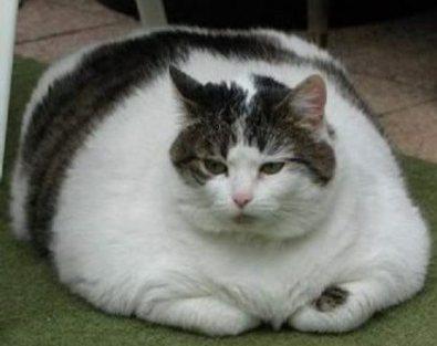 fat cat on duty 2