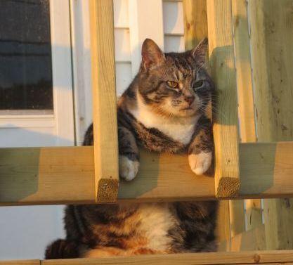 fat cat on duty