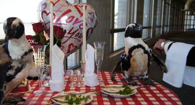 funny penguins dining out