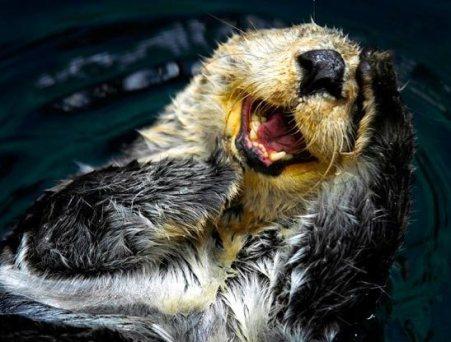 otter laughing.jpg