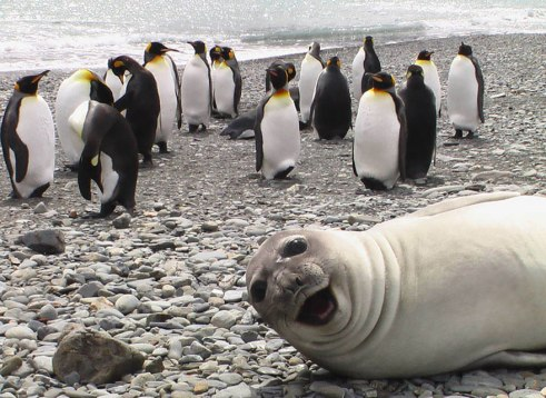 seal and penguins