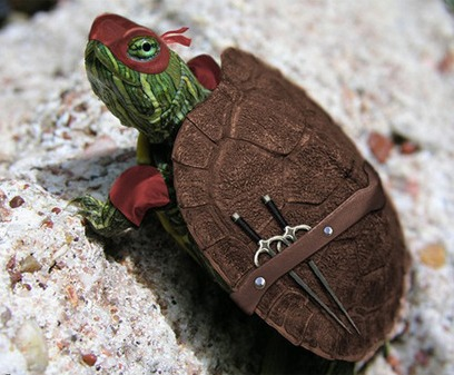 tortoise ninja