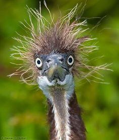 bad hair day - 1