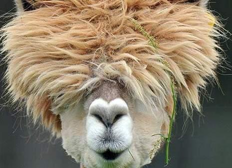 bad hair day -2