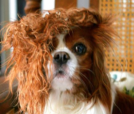 Bad-Hair-Day 3