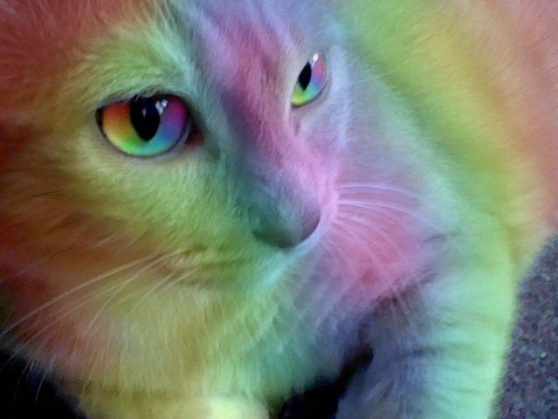 beautiful rainbow cat.jpg