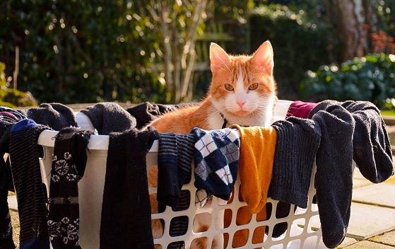 cat in laundry basket.jpg