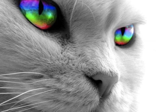 cat with rainbow eyes-1