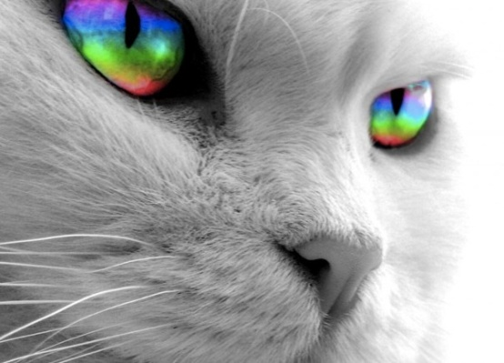 cat with rainbow eyes-1