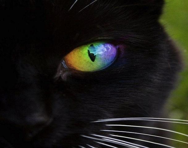 cat with rainbow eyes-2
